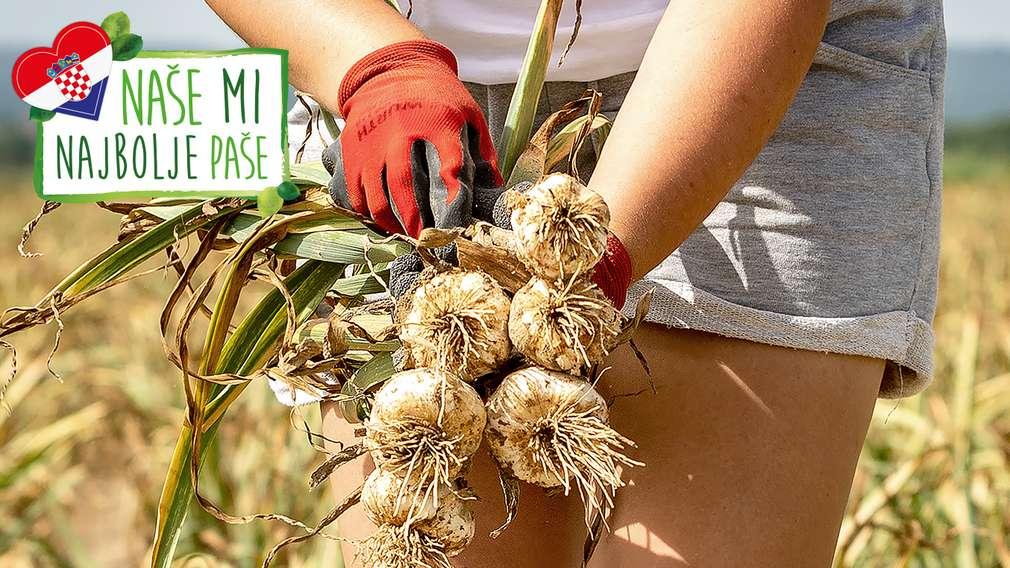 OPG Agrosan - domaće povrće uzgojeno pored jezera Novo Čiče