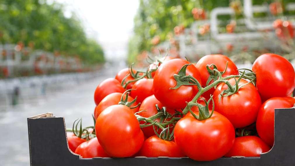 Ruris - domaća rajčica iz ekouzgoja