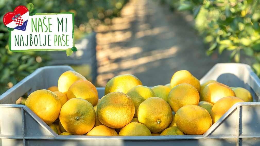 OPG Sršen - domaće mandarine iz srca Neretve