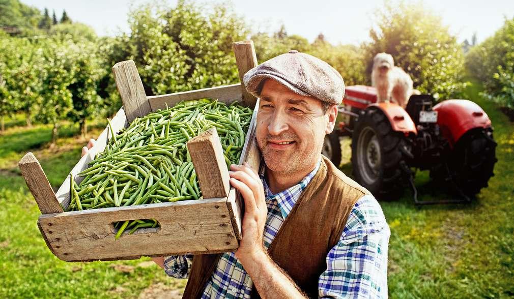 Voće i povrće - poljoprivrednik