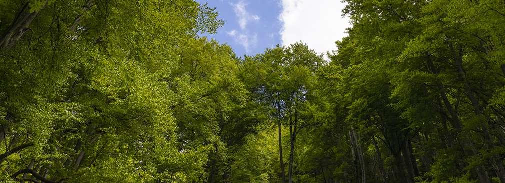 Las z dolnej perspektywy