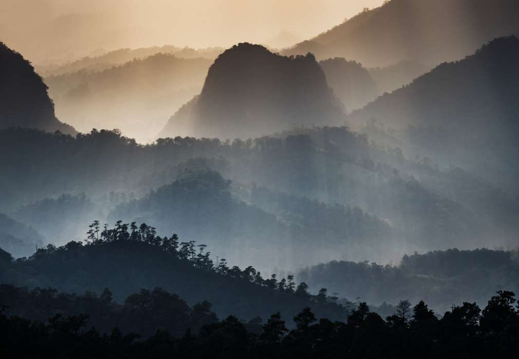 Lasy tropikalne
