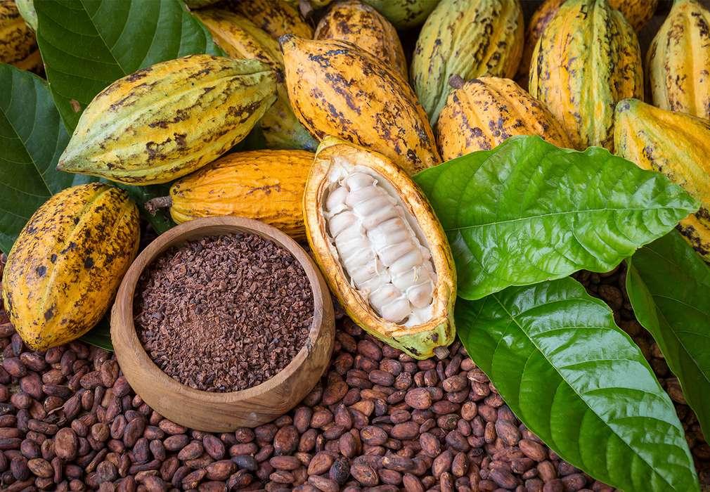 Cacao cu certificare UTZ