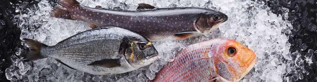 Oferte pește