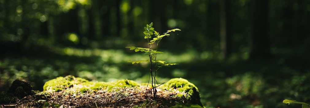 Waldlichtung mit heranwachsendem Baum