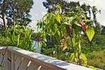 Gemüse anbauen - So klappt's auf  dem Balkon