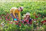 Zwei Kinder im Blumenbeet