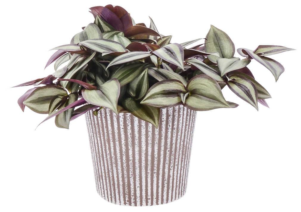 Abbildung des Angebots Grünpflanzen Mix in Keramik