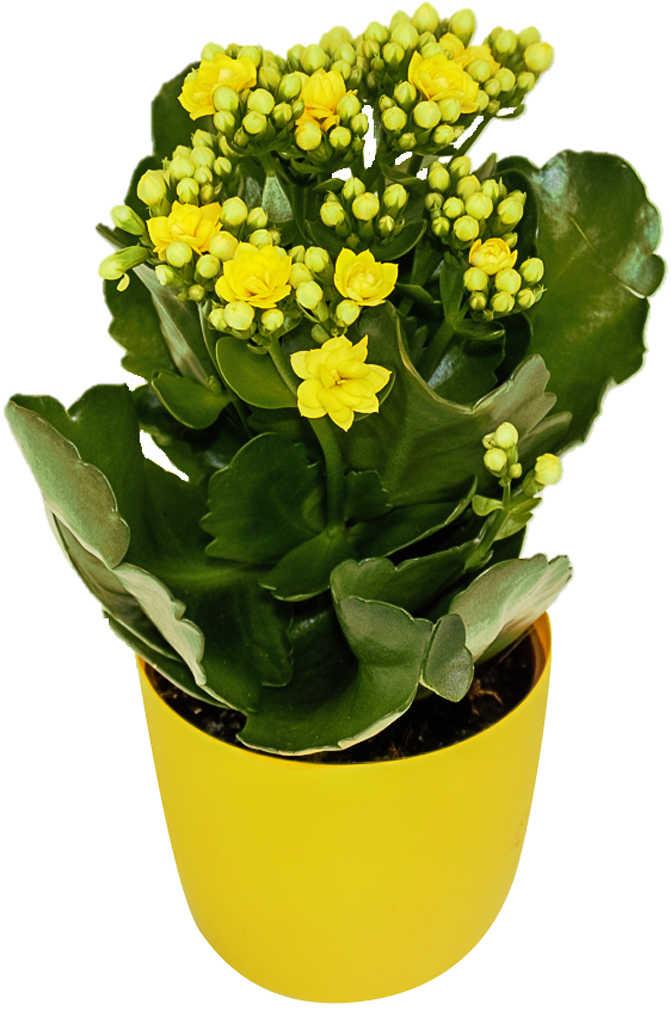 Abbildung des Angebots Blühpflanzen Mix im Übertopf