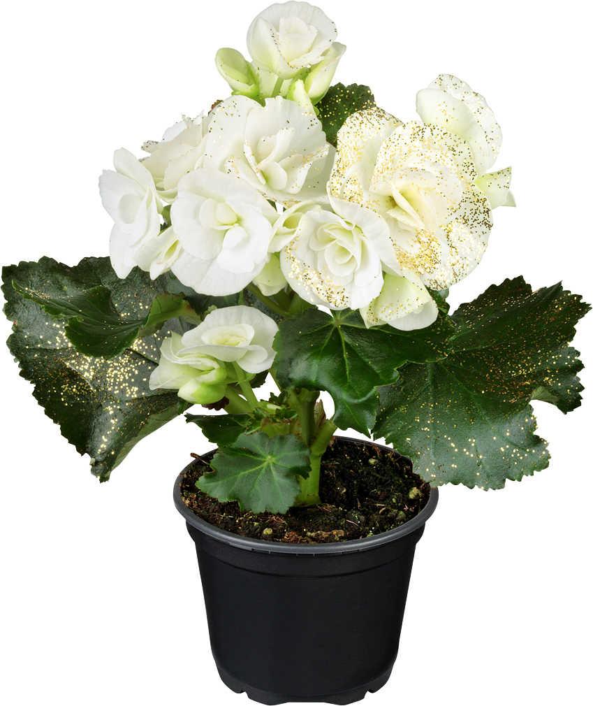 Abbildung des Angebots Blühpflanzen Mix