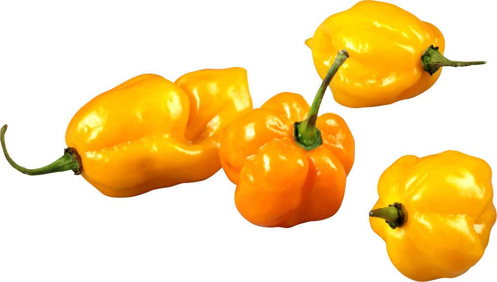 Abbildung des Angebots spanische/holländische Peperoni/Chili