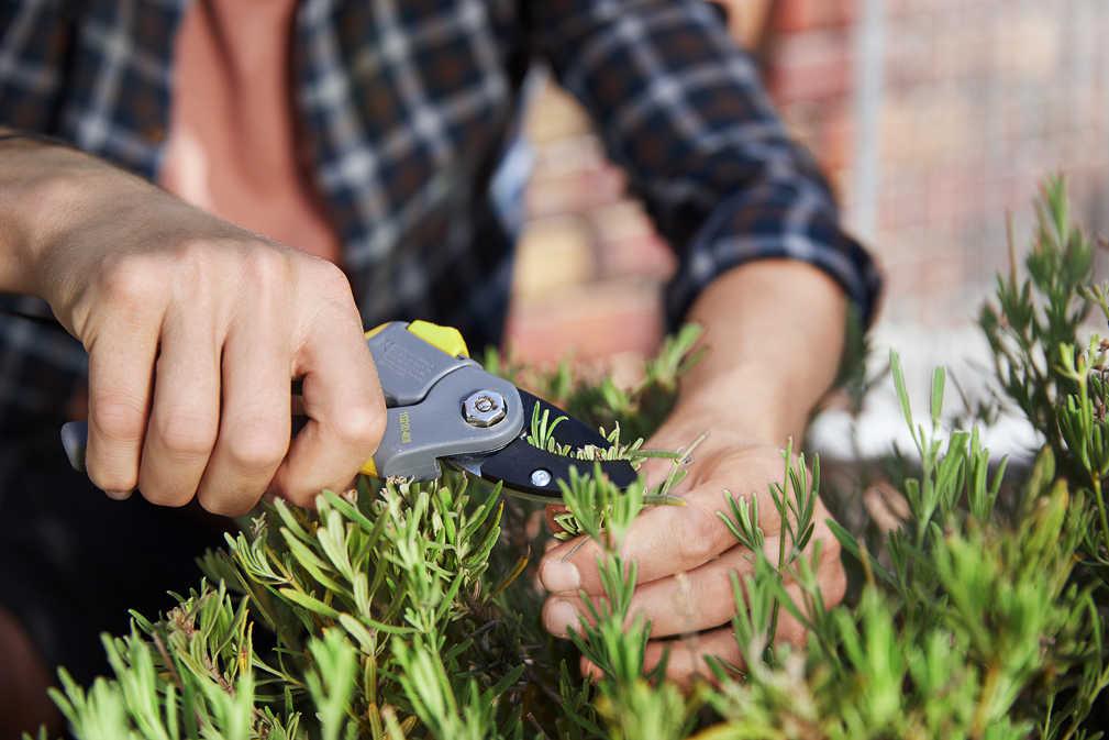 Abbildung des Angebots COUNTRYSIDE® Bypass-Gartenschere