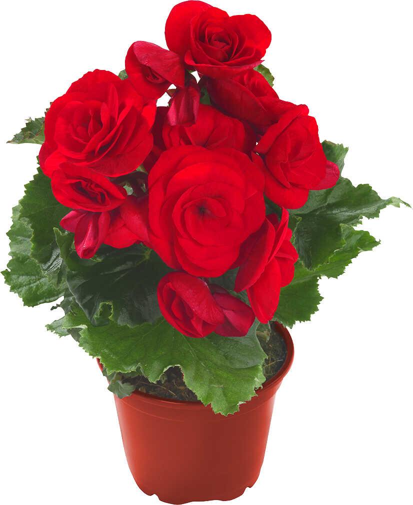 Abbildung des Angebots Blühpflanzen
